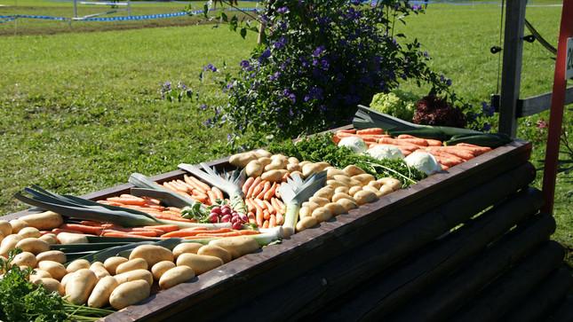 Gemüsesprung