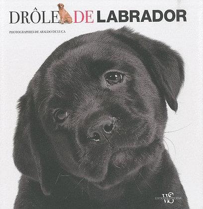 Drôle De Labrador  - Araldo De Luca - Editions White Star
