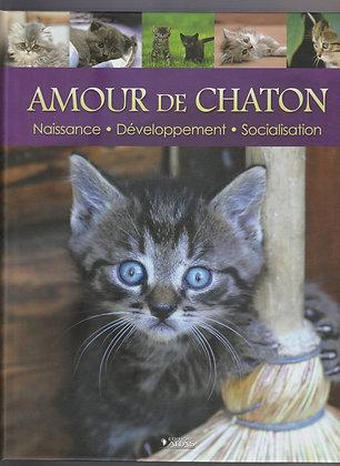Amour De Chaton Naissance-Développement-Socialisation