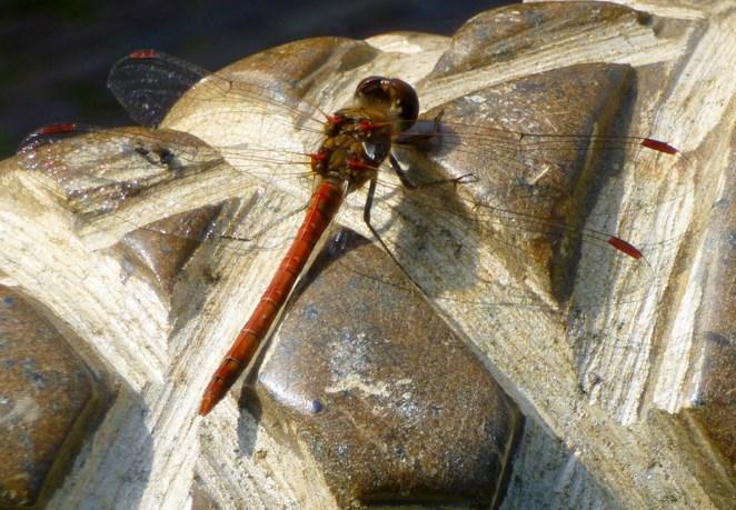 libelle op cocon