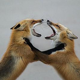 800_#wildlifephotography #wildlife #nati