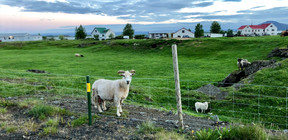 Nothern Iceland