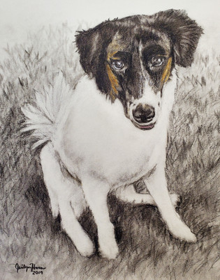 Black, White and Brown Dog