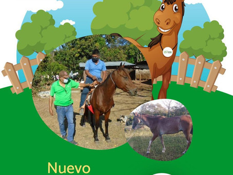"""Bienvenida al equipo de Pro Niñez el caballo """"Rocinante"""""""