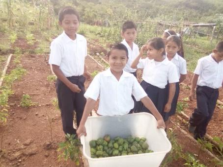 Seguimos con el programa de los Huertos Escolares en la Escuela de Llano Bonito