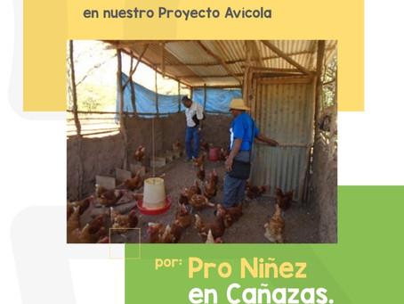 Programa de Huertos Escolares en 5 escuelas de Cañazas con Proyecto Avícola
