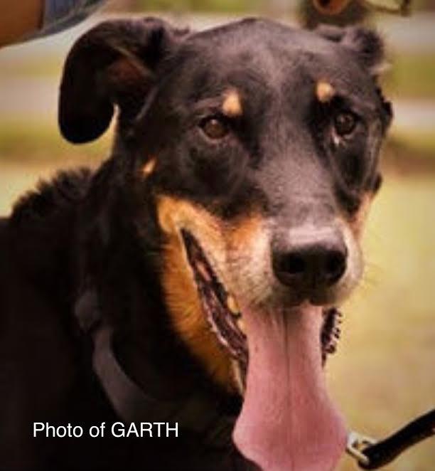 Photo of GARTH