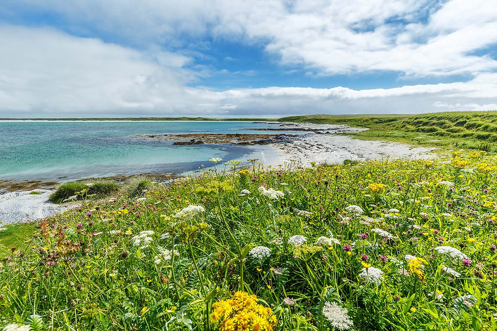 The machair in summer
