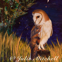 Barn owl under the stars