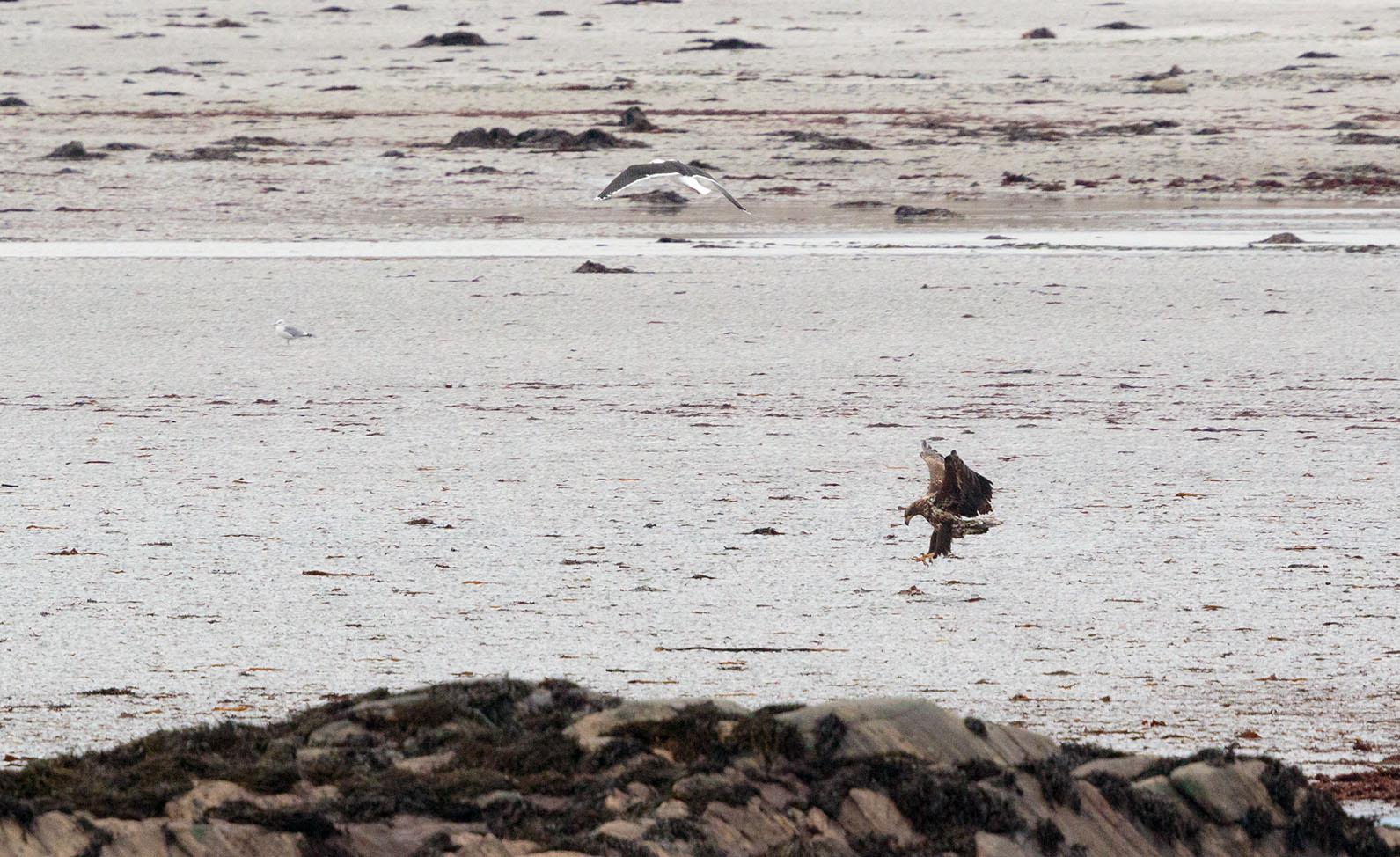eagle landing web