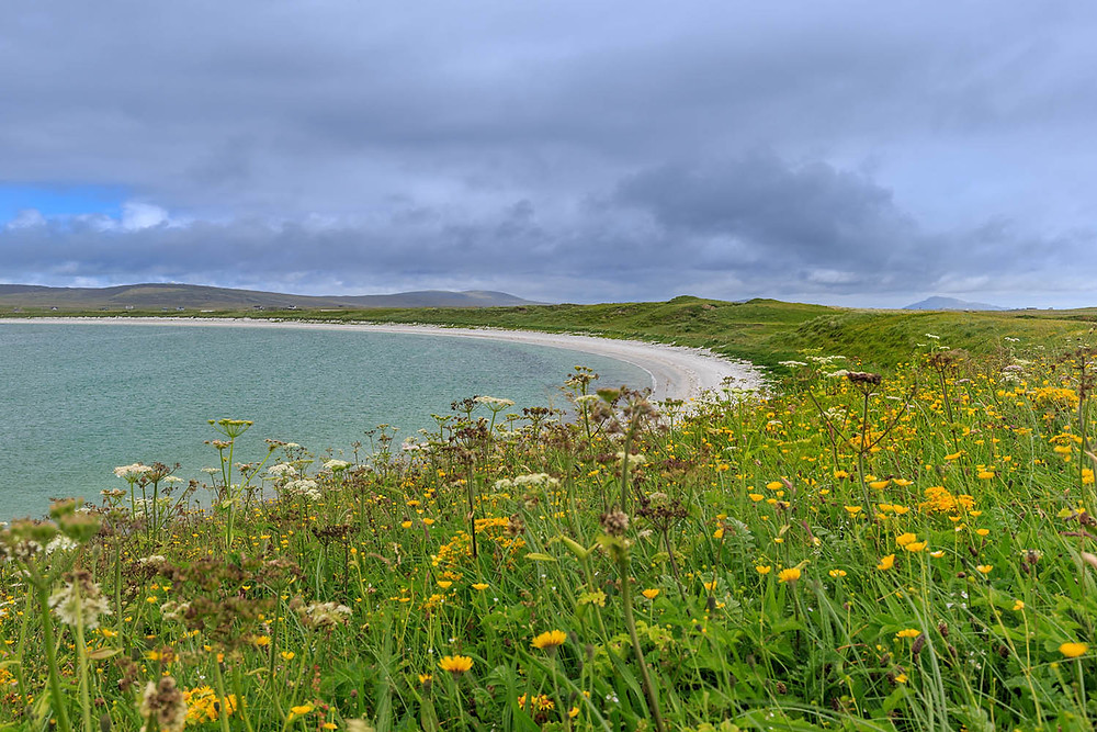 Machair flowers, Isle of North Uist near our self catering cottage