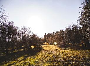 oliveto1.png