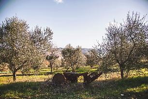 oliveto3.png