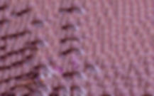 carole mousset microtome