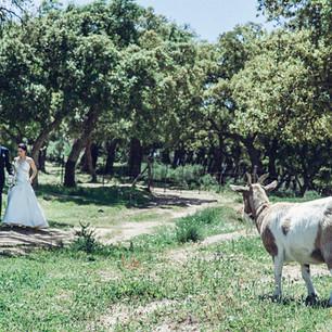 fotos-de-boda-la-almoguera-algeciras-09.