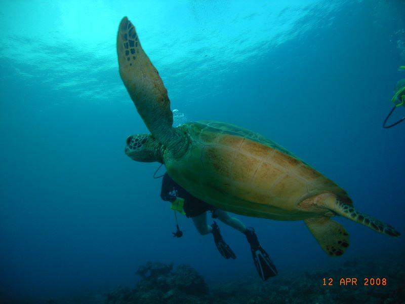 gun_beach_turtle