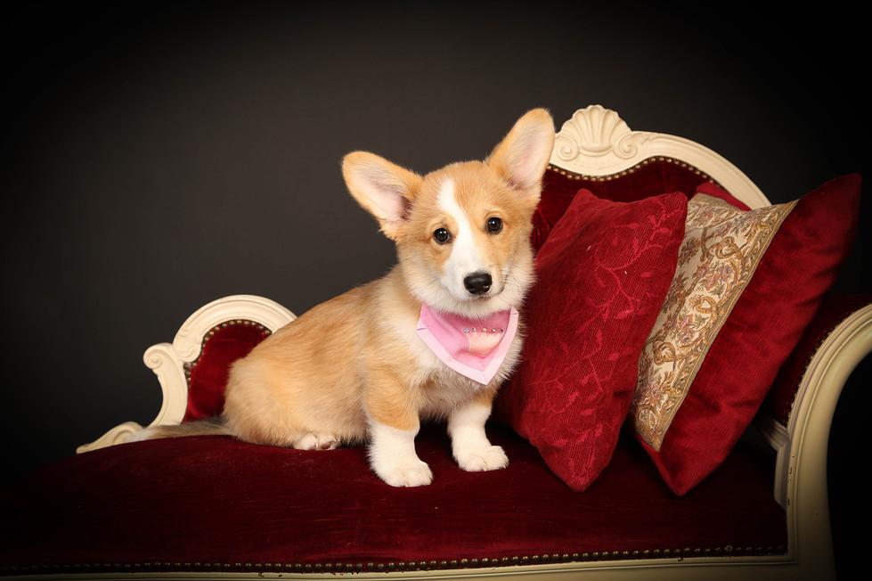 Pink-Weserhund.jpg