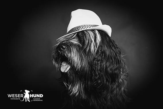 Weserhund Fiete-6951.jpg