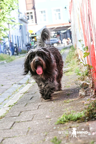 Weserhund Fiete-7053.jpg
