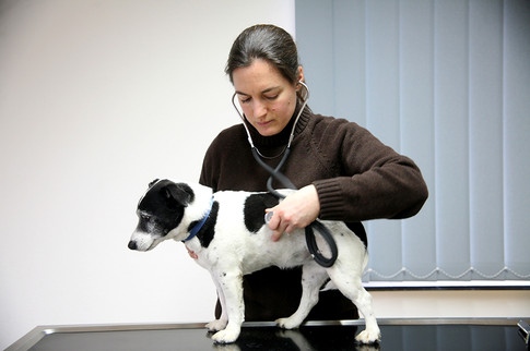 Anja Sitzenstock_Tierarzt_Claudia konerd