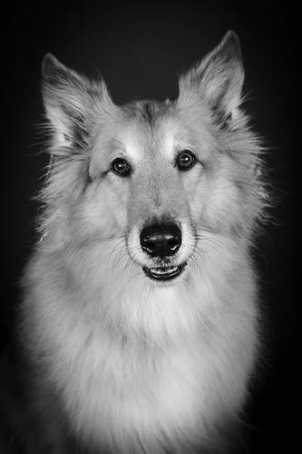colliemix-weserhund.jpg