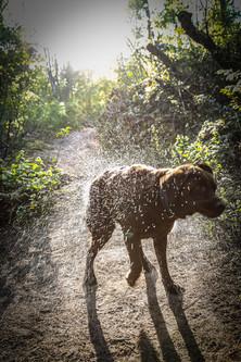 Labrador schütteln Unisee Bremen