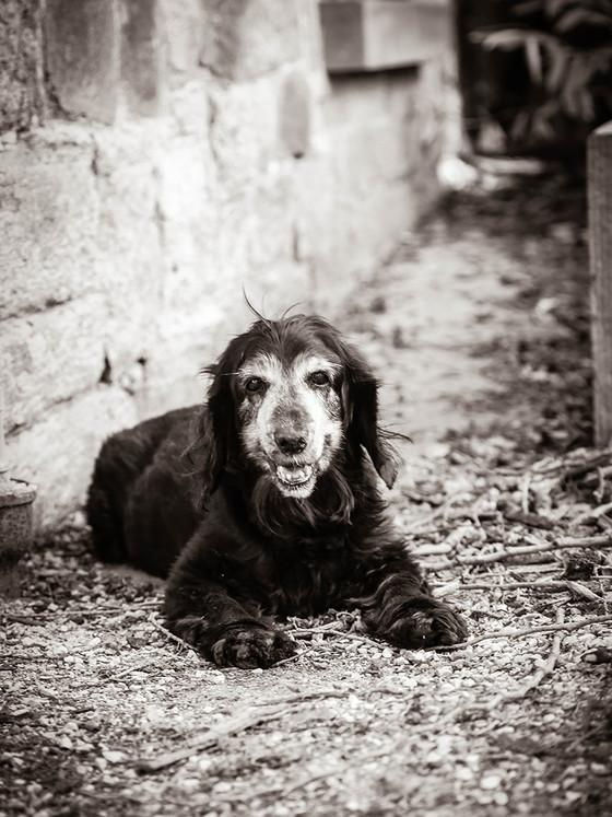 Weserhund Sissi-6726  (3).jpg