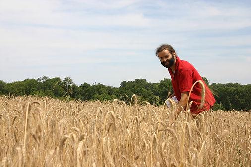 Mathieu Mallet cultive son blé dur bio pour ses pâtes
