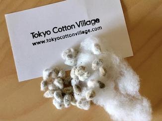 綿の種を蒔く
