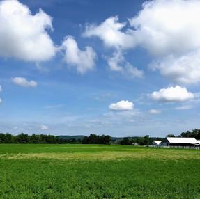A farm
