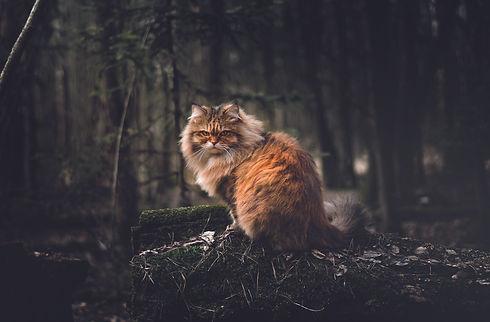 Katze.jpeg
