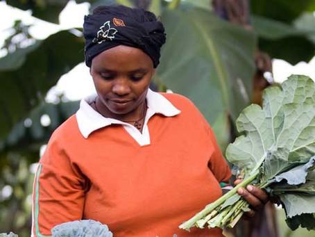 Landwirtschaft: Frauen in Ruanda