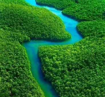 Regenwaldkauf im Amazonas