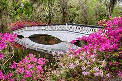 white-bridge-magnolia-plantation.jpg