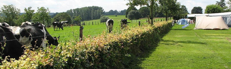 Zuid-Limburg-Camping-Waalheimer-Farm-uitzicht4 (Copy)_edited.jpg