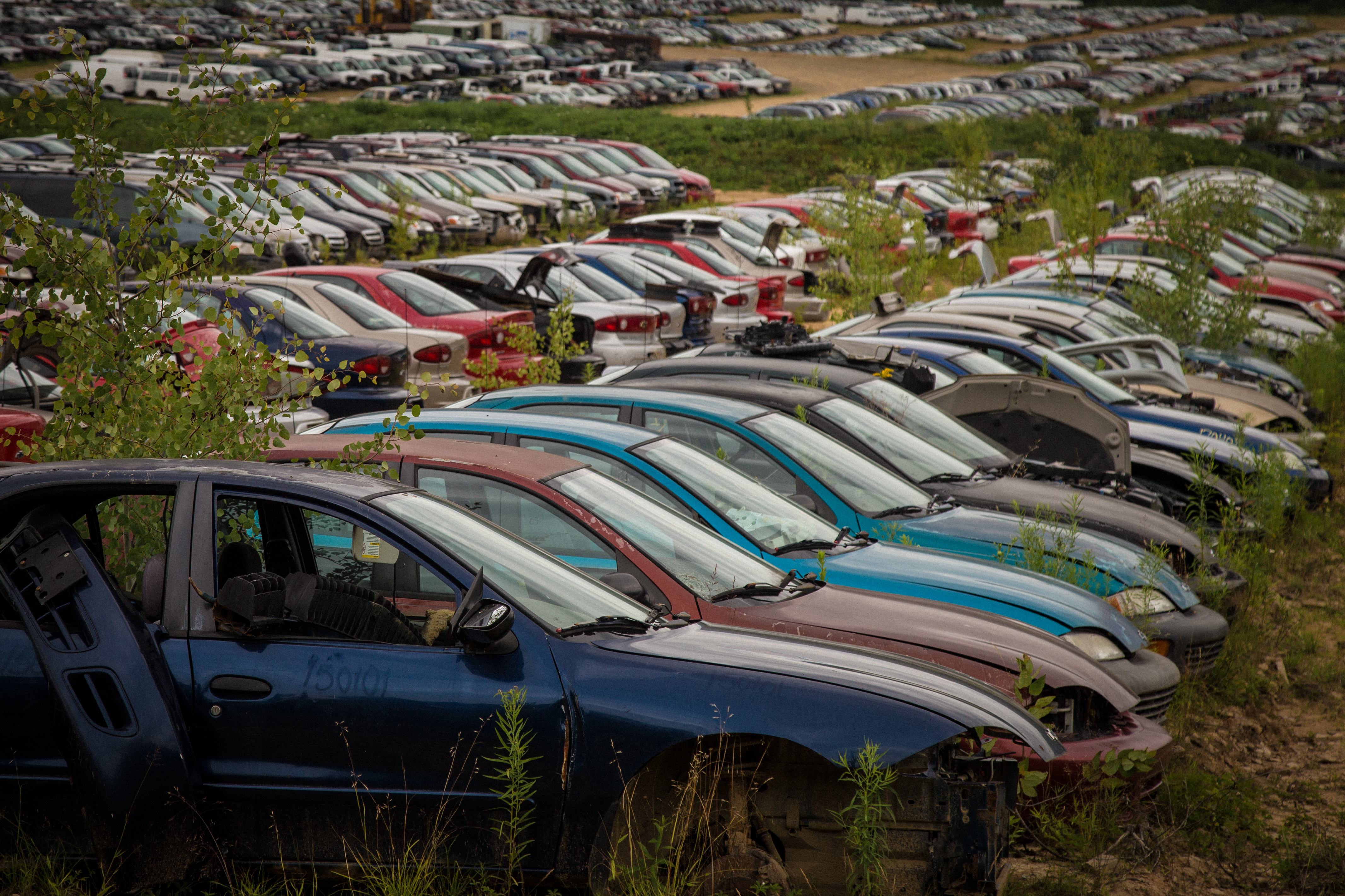 Car Graveyard (1 of 1)