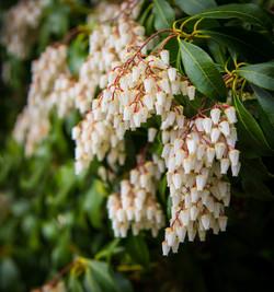 Flower (1 of 1)-2