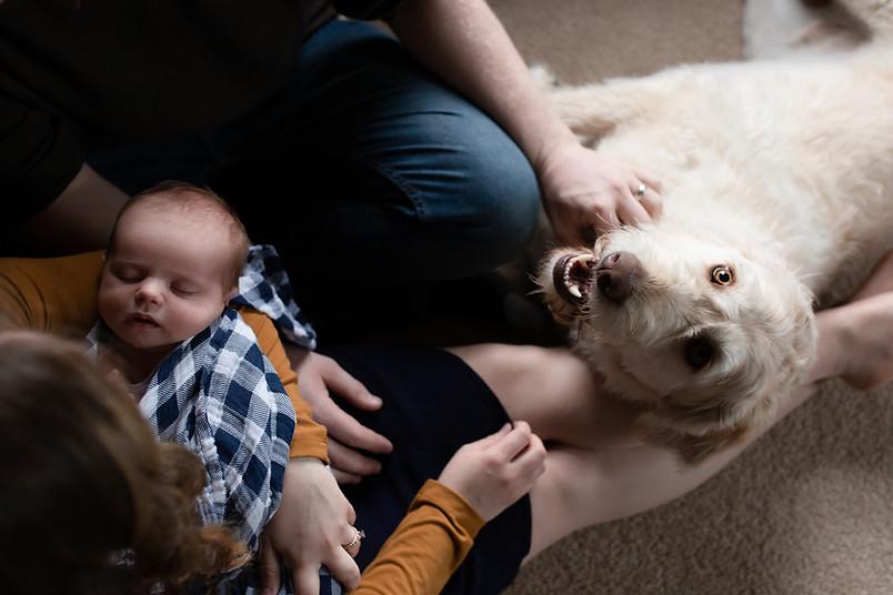 lifestyle newborn photo with dogs