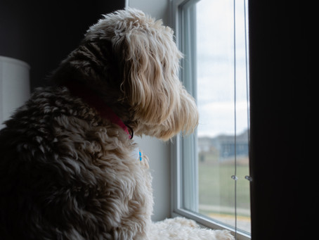 Photography 101 - At Home Photography Tips for Quarantine using only Window Lighting