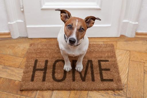 Proper Pet Etiquette for Apartment Living