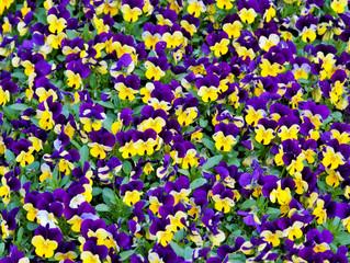 April Planting