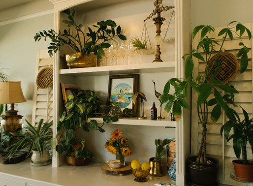 15 Houseplants That are Almost Impossible to Kill