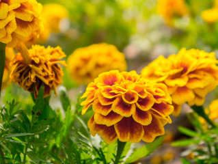 10 Easy-Care Annuals Every Garden Should Have
