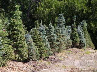Mid-August Tree Planting