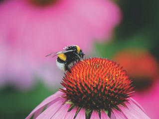 Perennial Pollinators