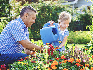 How to Care for your Annuals during the Heat