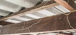 Termiteinfestation.jfif