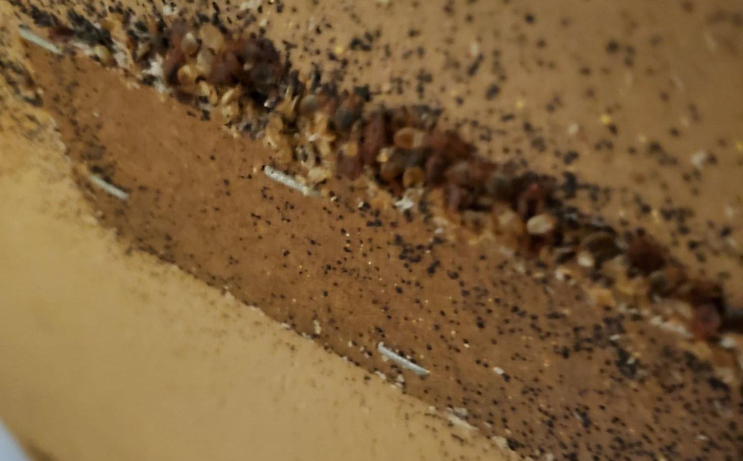 bedbugsonheadboard.jpg