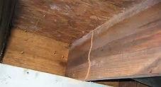 Termiteinfestation2.jfif