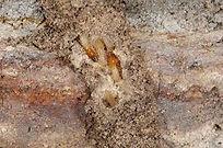 Termitemudtubes4.jfif